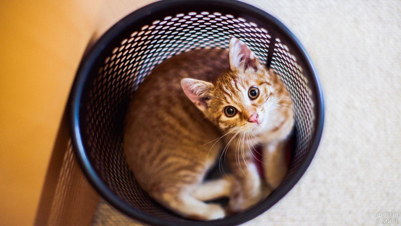 Рыжий котик в мусорном ведре