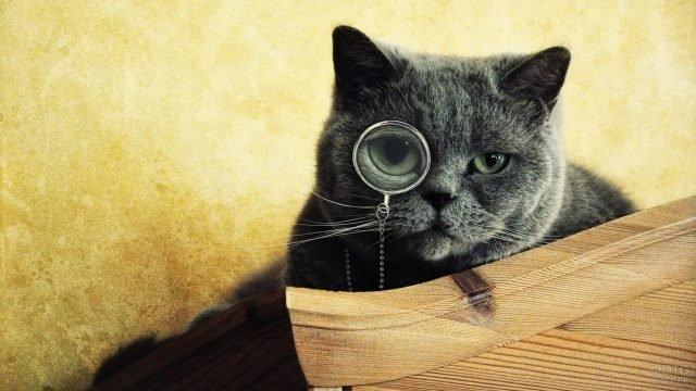 Серьёзный кот с моноклем