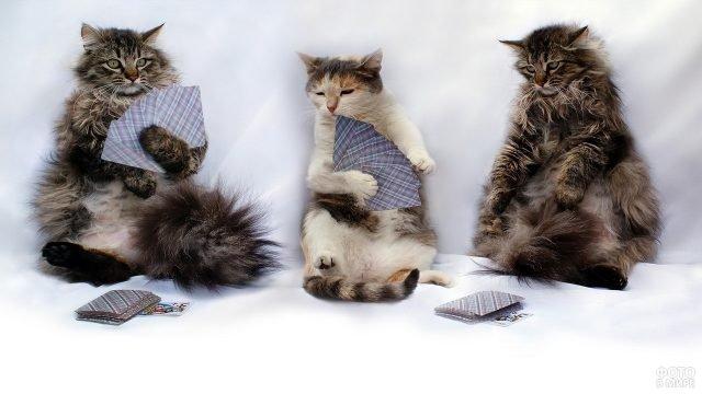 Три кота играют в карты