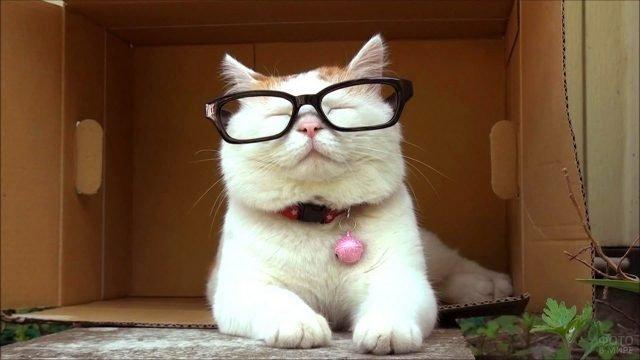 Умный кот в очках