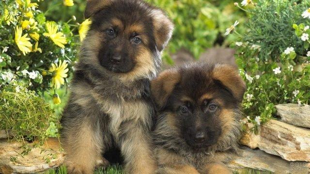Милые щенки позируют перед камерой