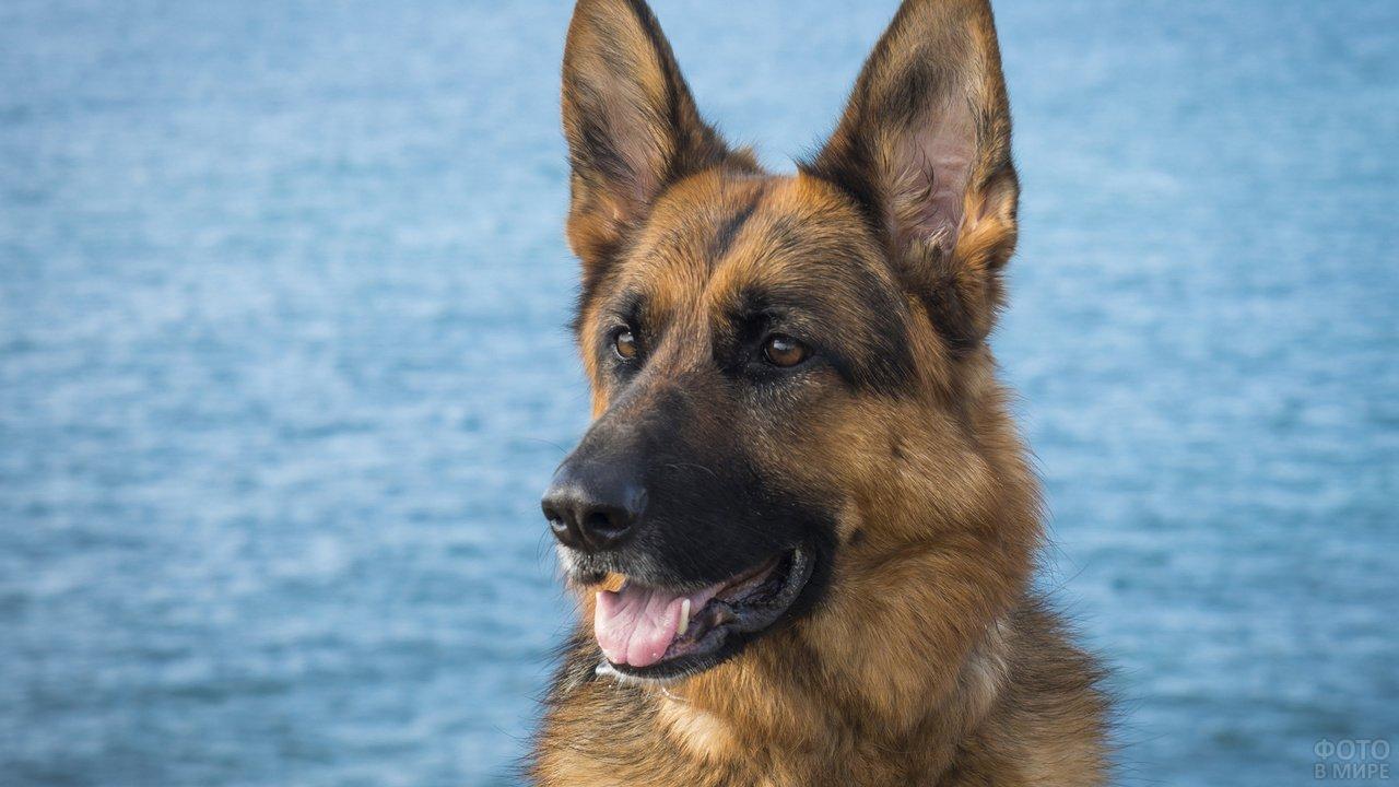 Пёс на фоне воды