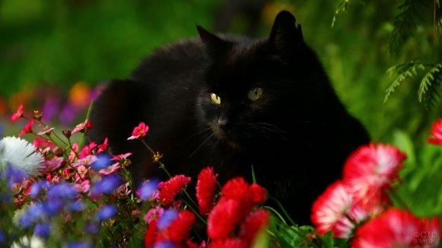 Чёрная киса лежит в цветочках