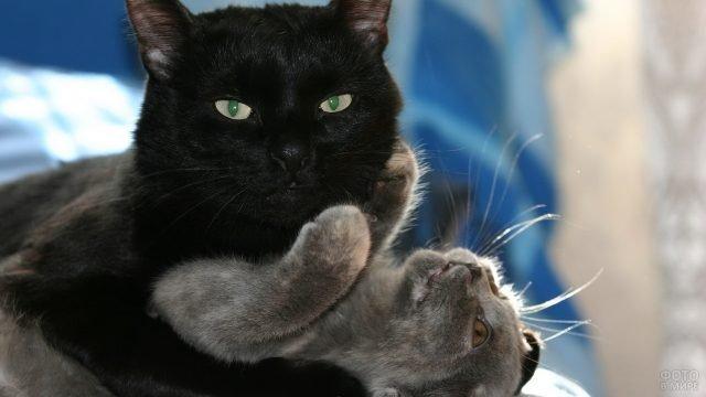 Чёрная кошка обнимает серого котёнка