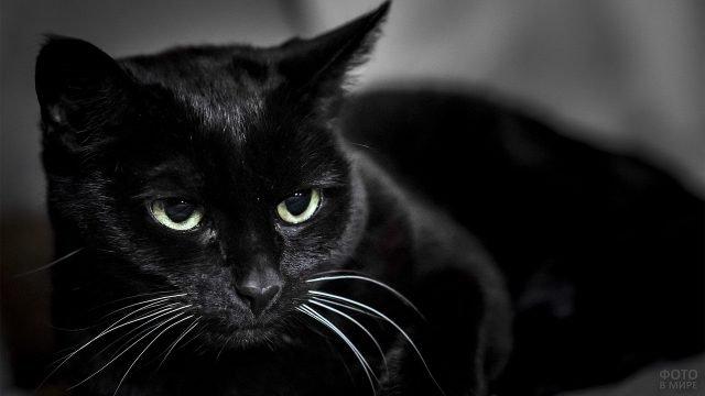 Чёрненький котя с белыми усами
