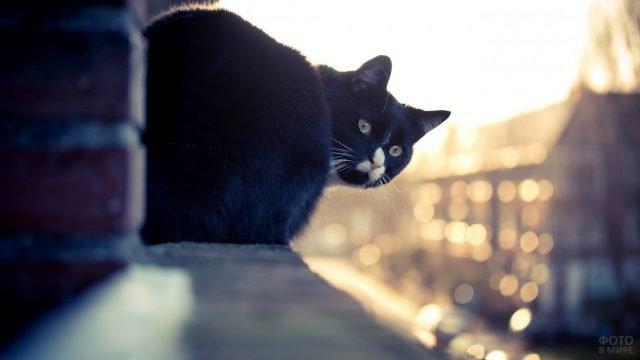 Чёрный котик с белой мордочкой сидит на краю карниза