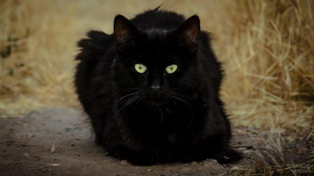 Чёрный котик сидит на тропинке