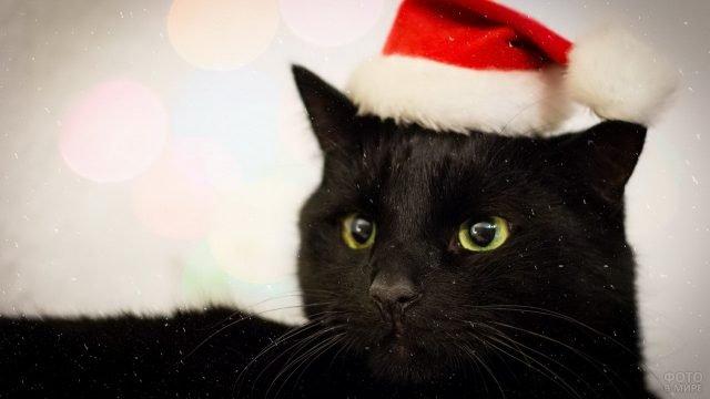 Чёрный котик в новогодней шапке