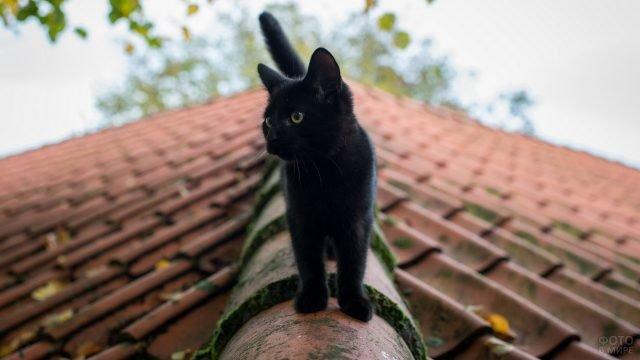 Чёрный котёнок шагает по черепице