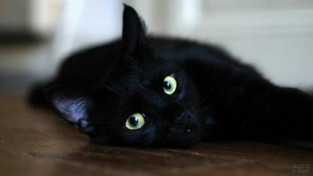 Киса отдыхает на полу