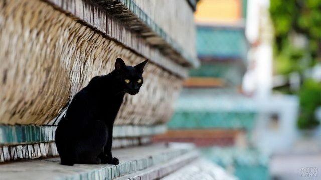 Киса сидит возле стены здания