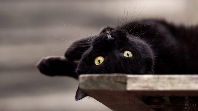 Котик лежит вверх ногами