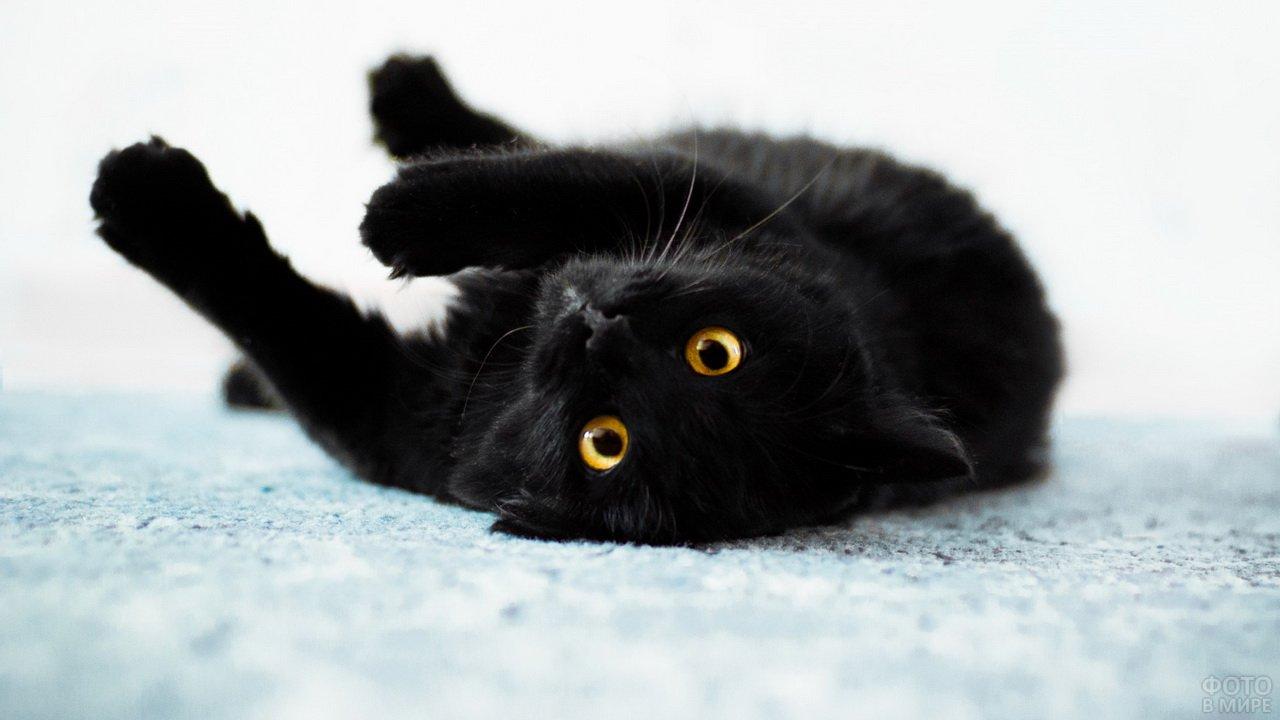 Котя завалился на спину и смотрит в кадр