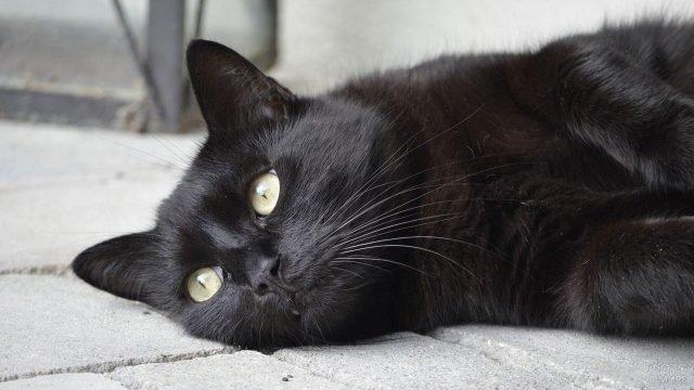 Уставший чёрный кот прилёг отдохнуть на тротуарную плитку
