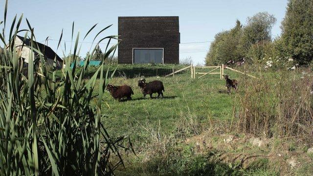 Козы на ферме в Нормандии