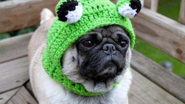 Мопс в вязаной шапочке