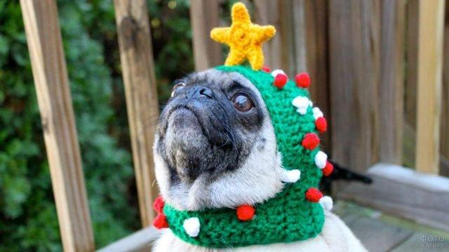 Пёс мопс в креативной шапочке