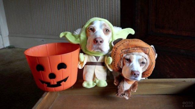 Псы бигль в хеллоуинских костюмах