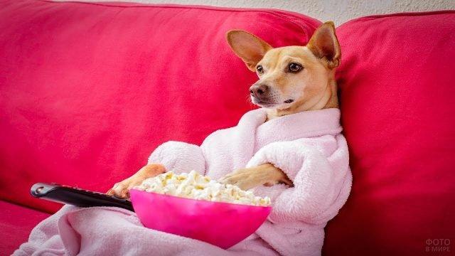 Собака в халате и с попкорном на диване