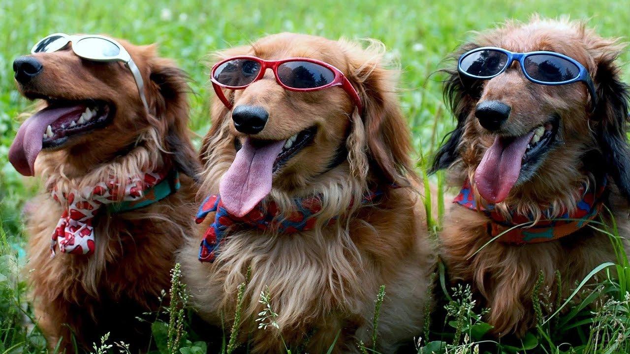 Смешные животные фото собаки, месяцем