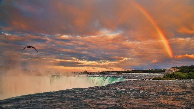 Летящая птица и радуга на вершине водопада на закате
