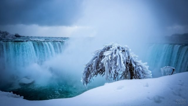 Обледеневшее дерево на фоне водопада