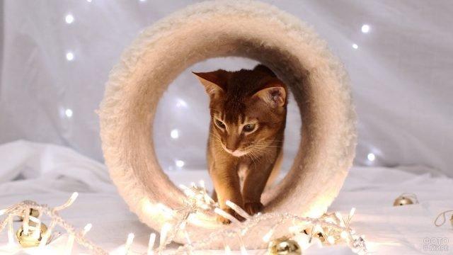 Абиссинская кошечка стоит в декоративной трубе