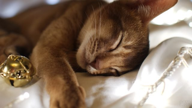 Кошка спит на хозяйской кровати