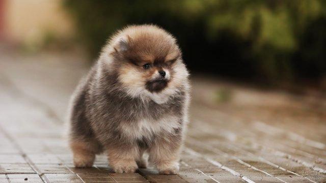 Маленький щенок на прогулке после дождя