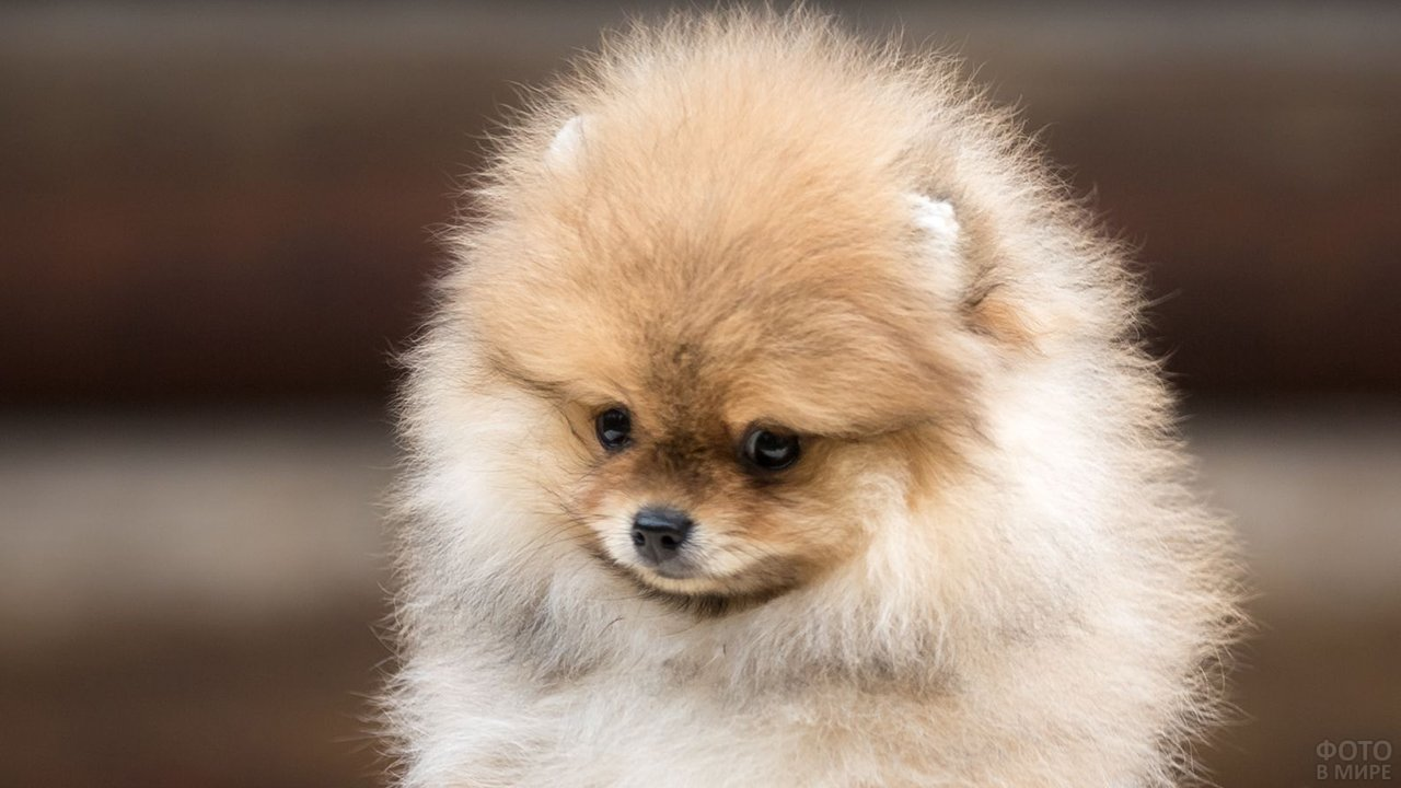 Собачка испуганно на кого-то смотрит