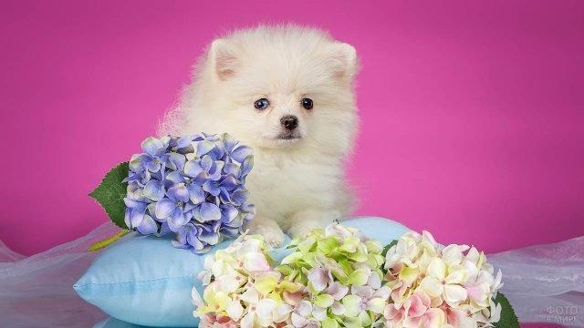 Собака на подушке с цветами позирует в студии