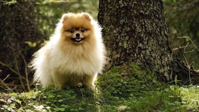 Собака сидит под деревом в живописном лесу