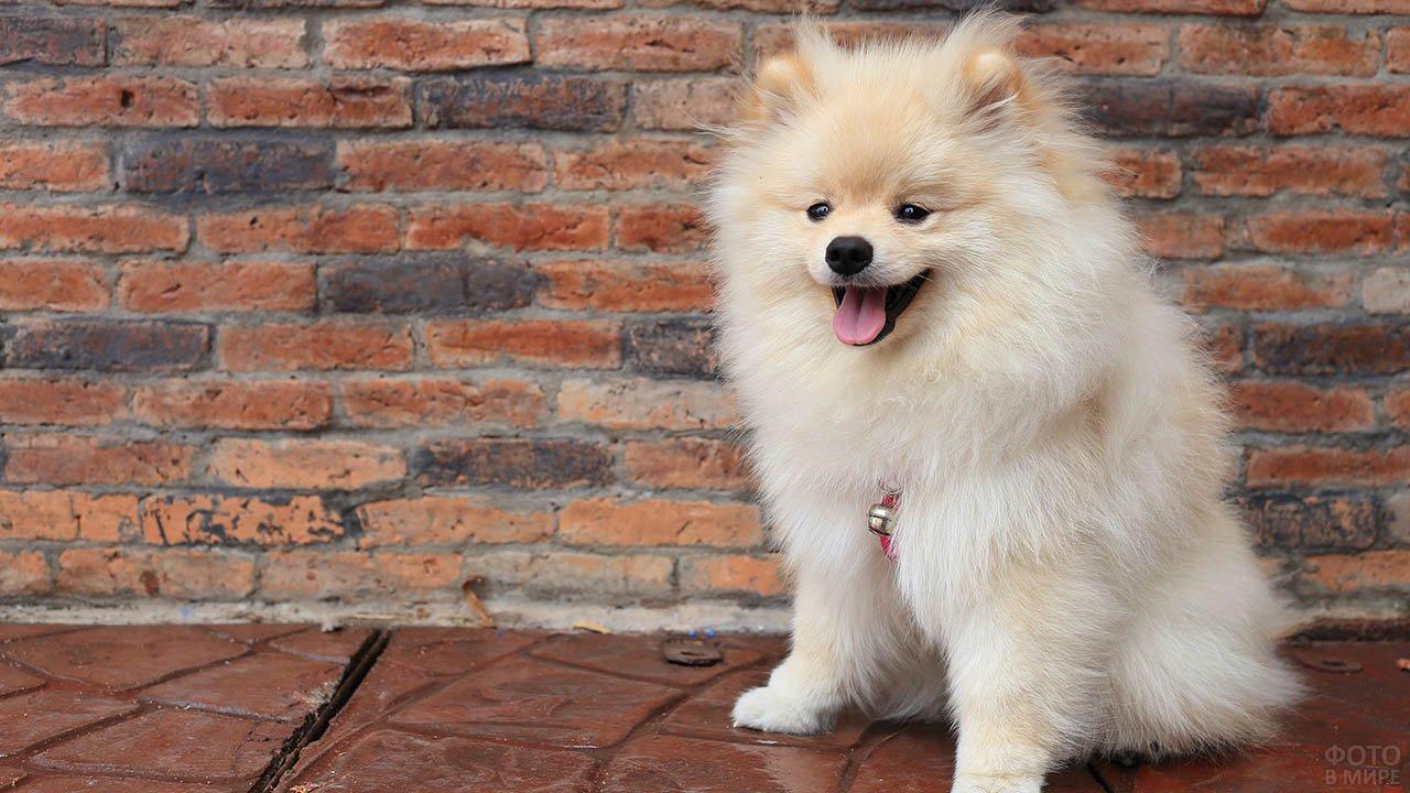 Собака сидит возле кирпичной стены