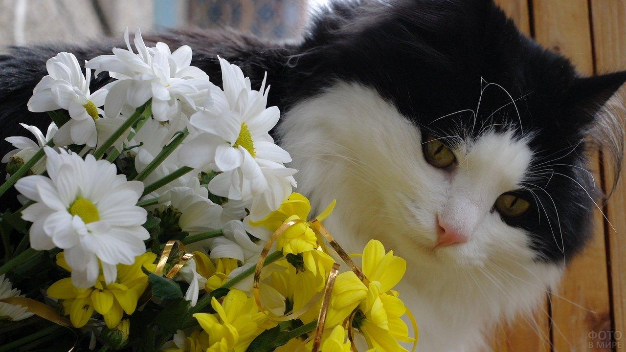 Чёрно-белый кот с букетом