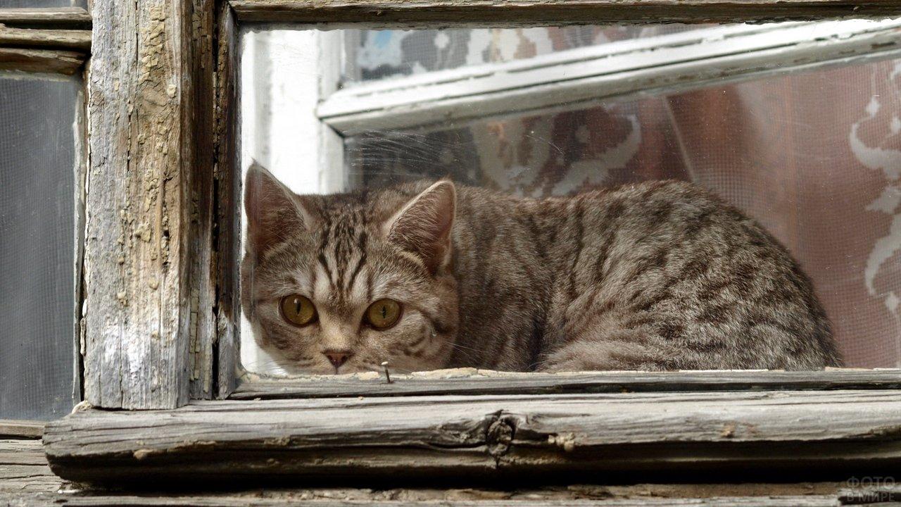 Грустная кошка смотрит из окошка