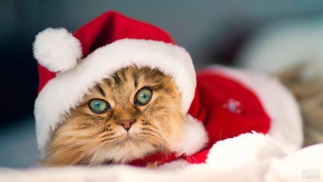 Кот в новогоднем костюме