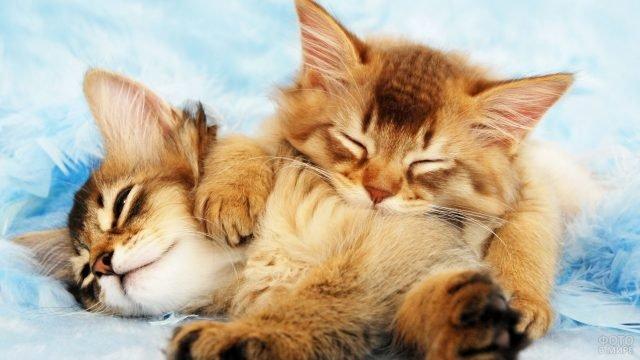 Котята в перьях спят
