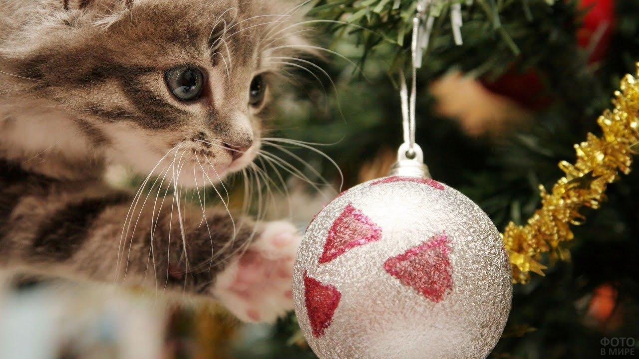 Котёнок с новогодней игрушкой
