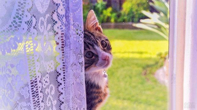 Котёнок заглядывает в окошко