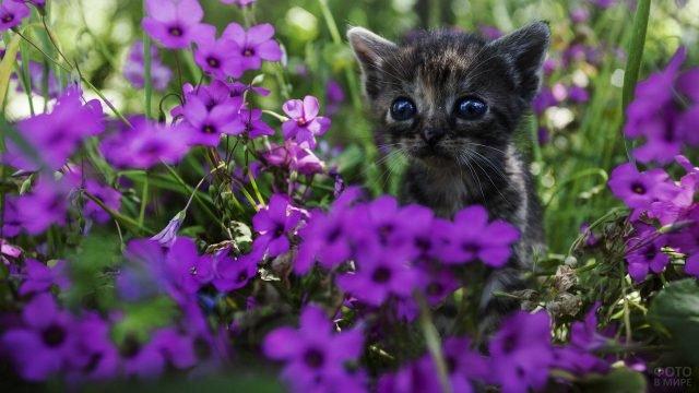 Маленький котёнок в цветах