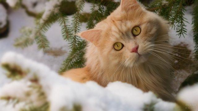 Милый рыжий кот под ёлочкой