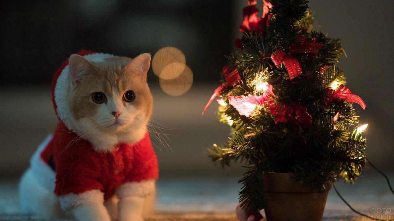 Нарядный котик у ёлки