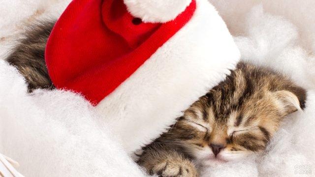 Новогодний котёнок спит