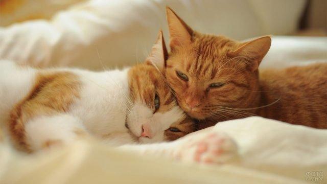 Рыжий кот с кошкой