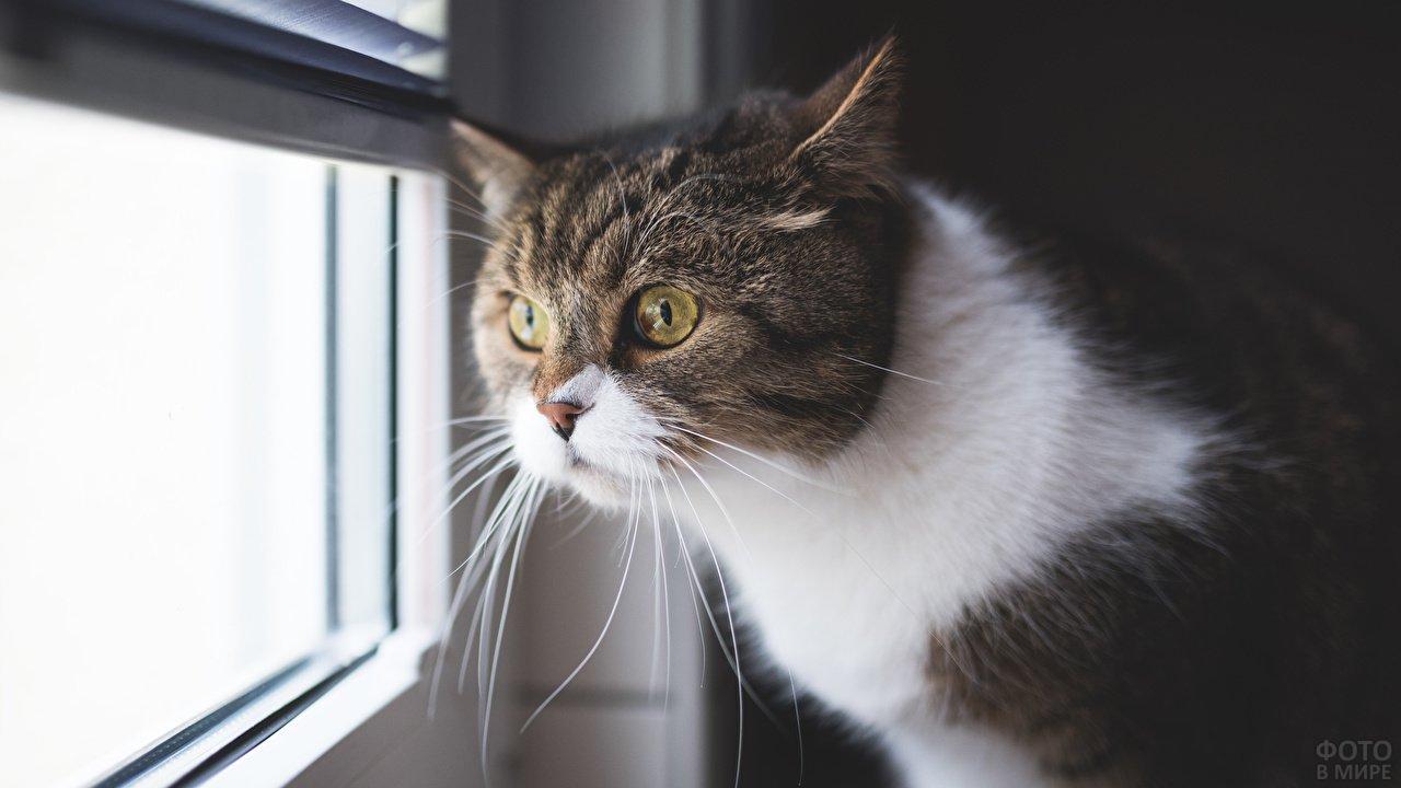 Серьёзный кот смотрит в окно