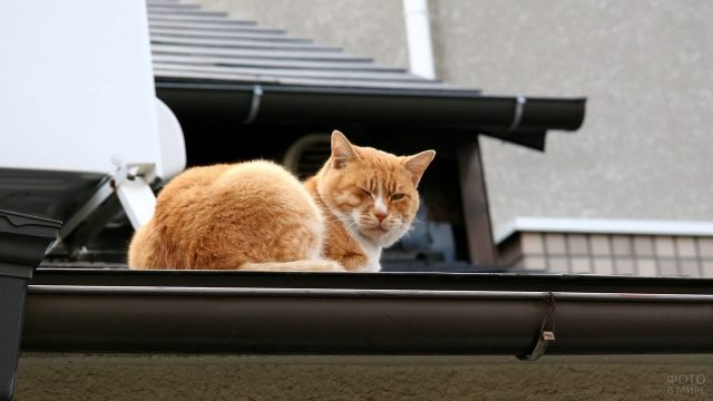 Сонный кот на крыше