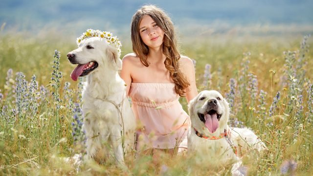 Девочка с собаками на лугу в цветах
