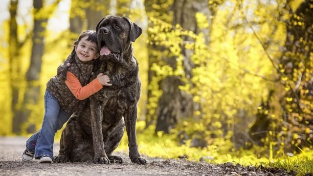 Девочка с собакой в осеннем парке