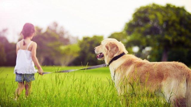 Девочка ведёт собаку за поводок