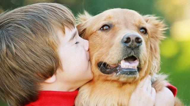 Мальчик крепко обнимает собаку